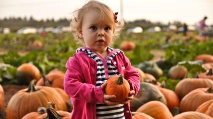pumpkins_Baggenstos