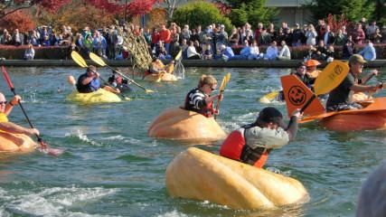 Regatta-pumpkins