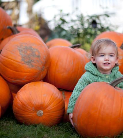 2003_PlumperPumpkin_CREDIT_MelissaHay_2011