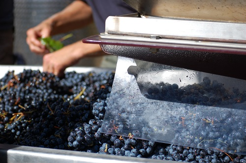 The crush pad de-stems and crushes juice from just-picked grapes at Kramer Vineyards.