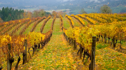 A winery along the Vineyard & Valley Scenic Tour Route in fall. Photo by Wayne Flynn.