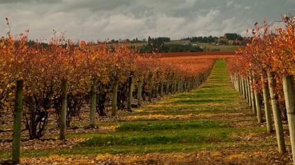 vineyard_Joel Zak