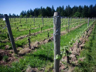 Patton Valley Vineyard in Gaston, Oregon