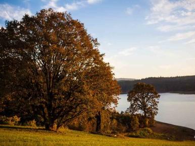 Hagg Lake in Gaston, Oregon