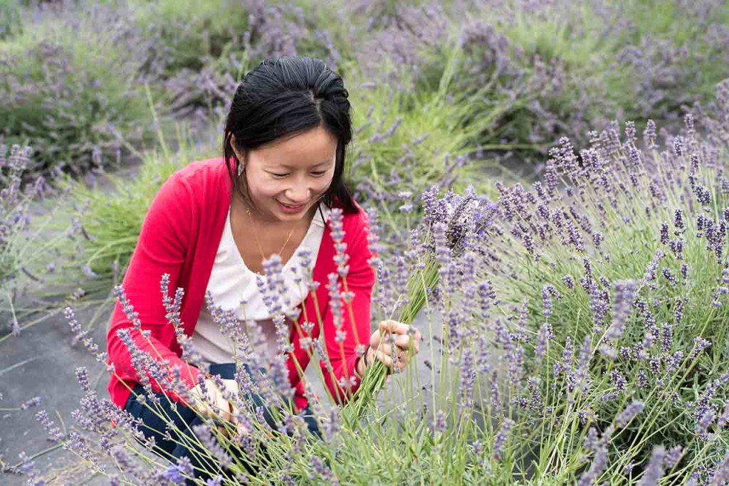 Things to do in the Tualatin Valley Lavender Farms