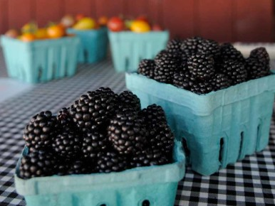 Blackberries from Smith Berry Barn in Hillsboro in Oregon's Tualatin Valley