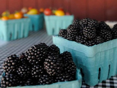 Blackberries from Smith Berry Barn in Hillsboro, Oregon