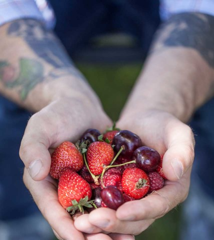 Duyck's Peachy-Pig Farm Berries