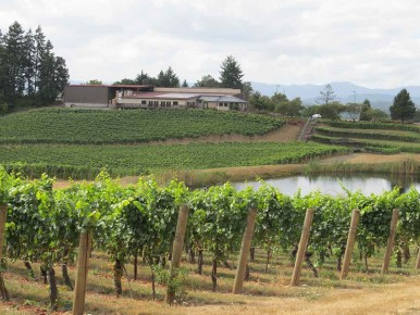 Elk Cove Vineyards in Gaston, Oregon