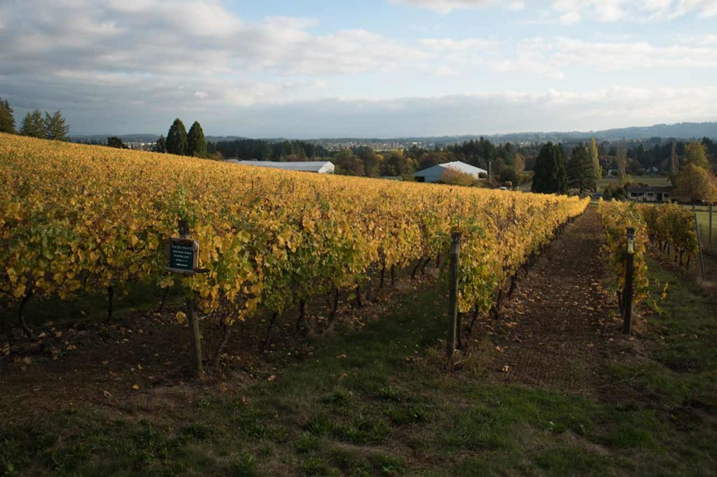 Vineyards in Oregon's Tualatin Valley