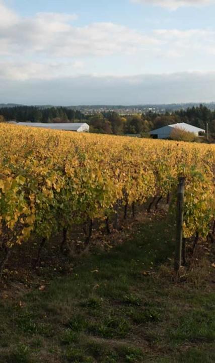 Vineyards in Oregon's Tualatin Valley