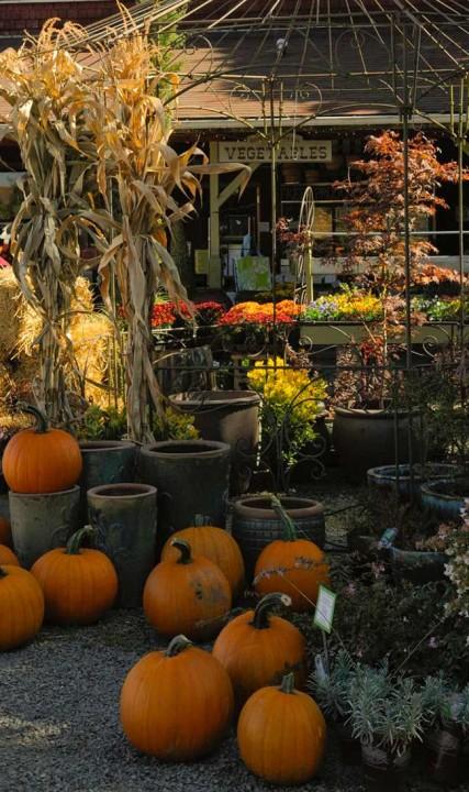 Smith Berry Barn pumpkins