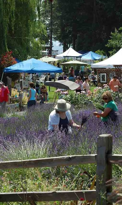 Enjoy picking lavender in Oregon's Tualatin Valley