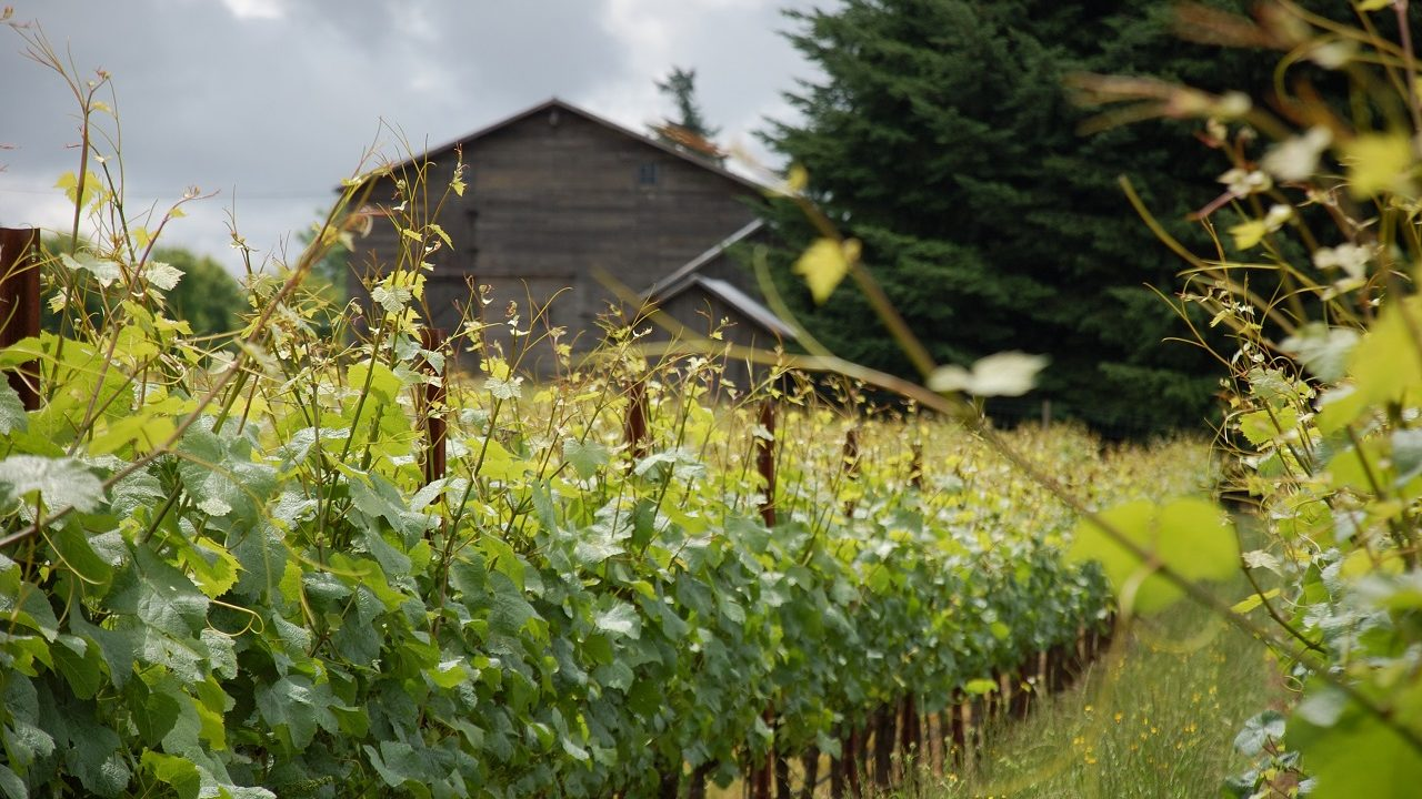 Alloro Vineyard in Sherwood, Oregon