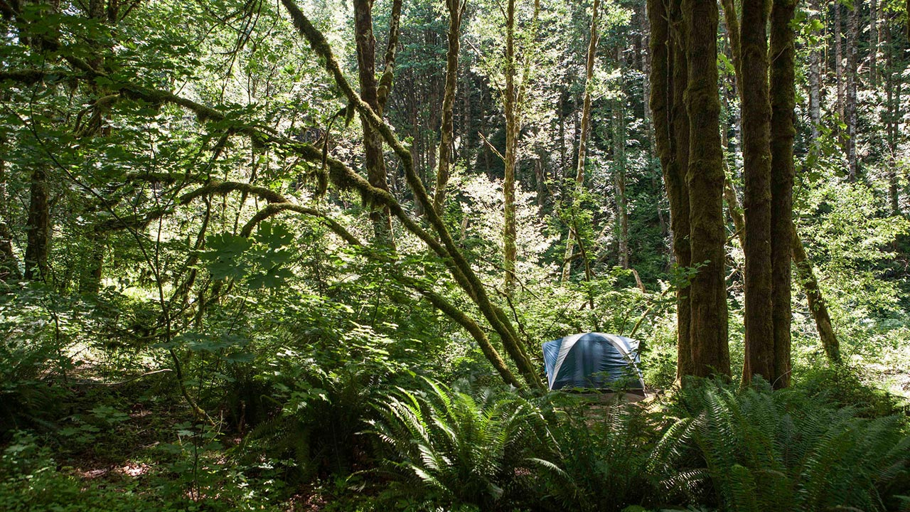 Gales Creek Camping in Forest Grove in the Tualatin Valley