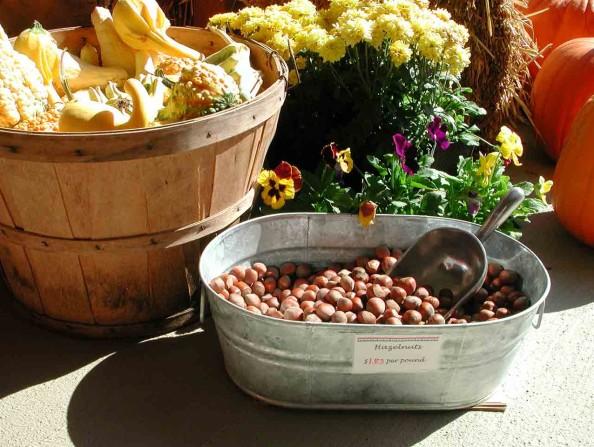 Hazelnuts grown in Oregon's Tualatin Valley