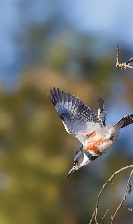 Birding Middle