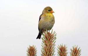 Bird watching in Oregon's Tualatin Valley
