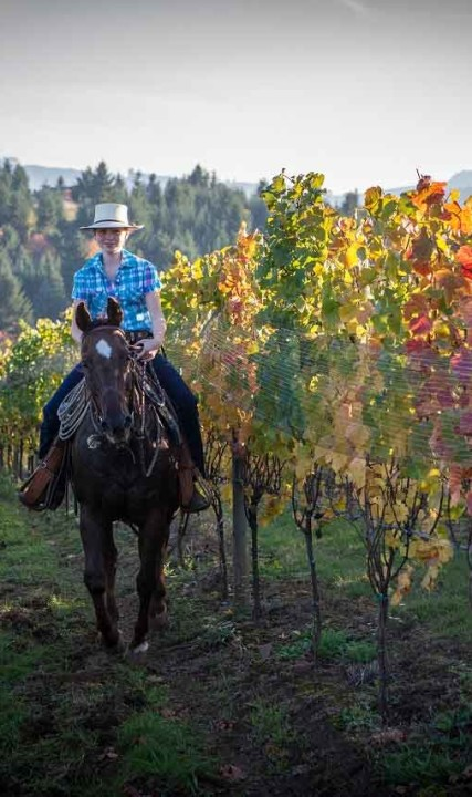 Horseback riding at Apolloni Vineyards in Forest Grove, Oregon