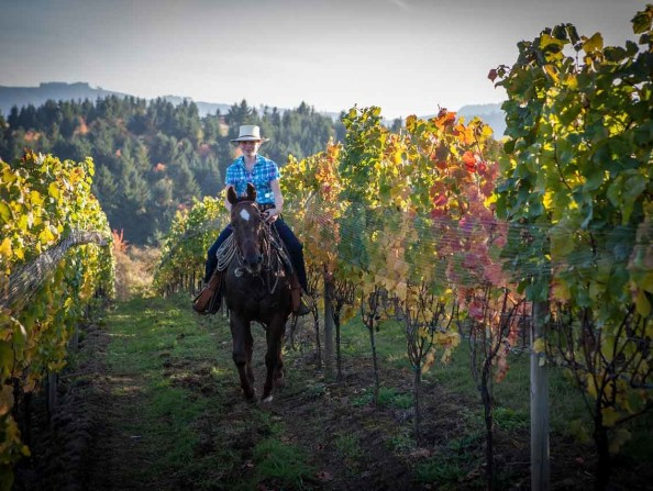 discover-the-wonders Horseback riding at Apolloni Vineyards