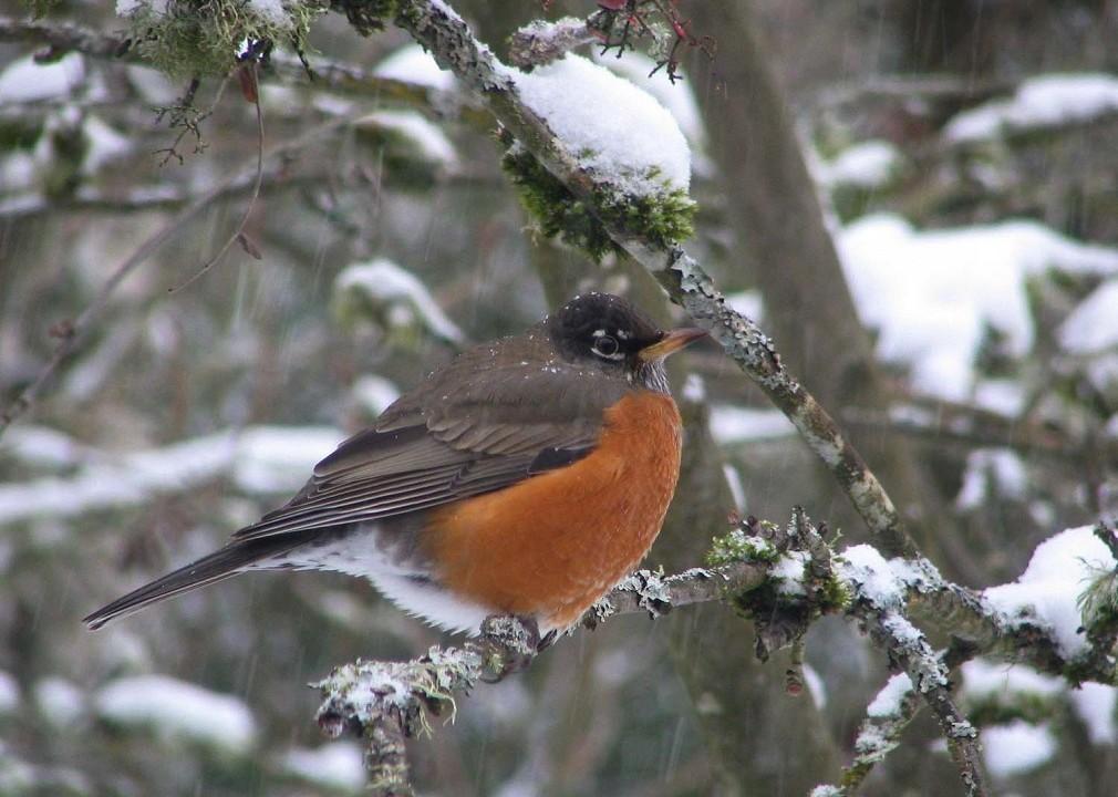 Winter Bird Watching in Oregon's Tualatin Valley