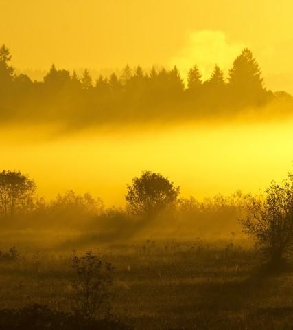 Wildlife Watching In Oregon Itineraries Tualatin Valley