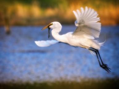 Tualatin River Bird Festival Itinerary