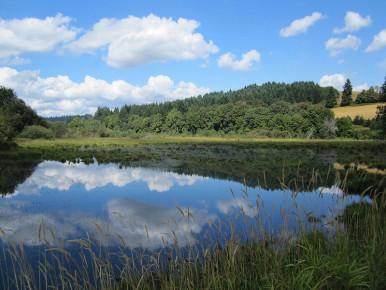 Killin Wetlands