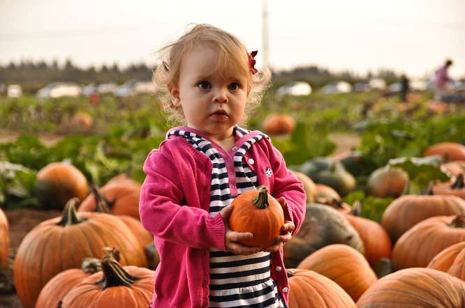 Plumper Pumpkin Patch & Tree Farm in Portland in Oregon's Tualatin Valley, pumpkin patches, farms and markets