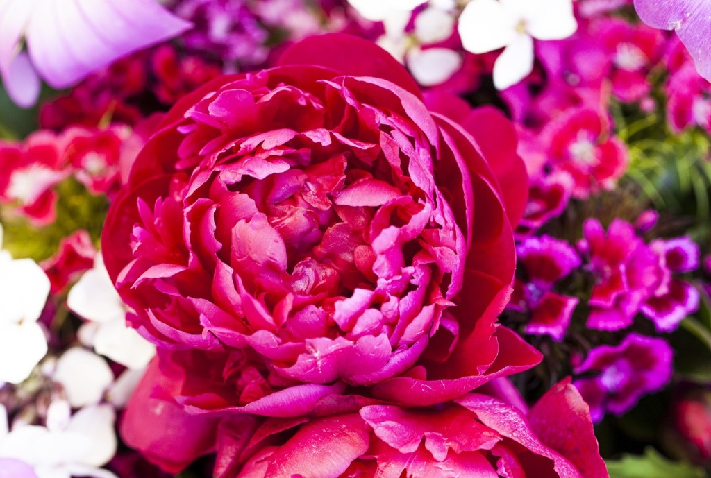 Beaverton Farmers Market flowers in the Tualatin Valley