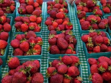Strawberries at the Forest Grove Farmers Market