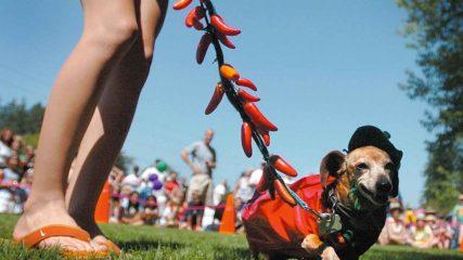 One Weekend, Three Summer Festivals