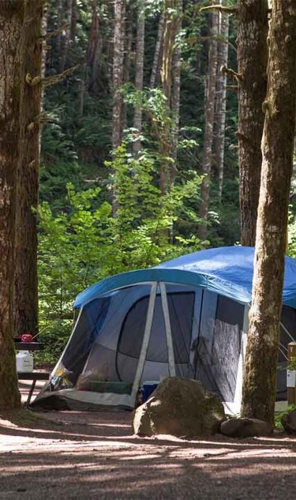 Camping Gales Creek