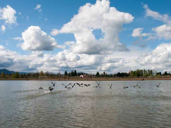 Fernhill Wetlands in Forest Grove in Oregon's Tualatin Valley