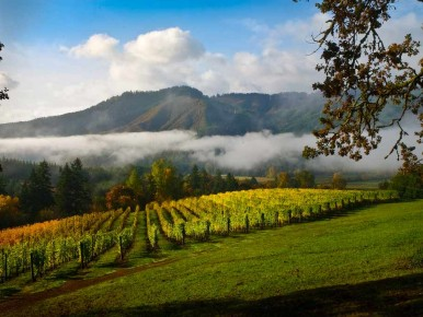 Vineyard and Valley Scenic Tour Route in Oregon's Tualatin Valley