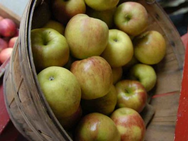 Heirloom Apples Festivals