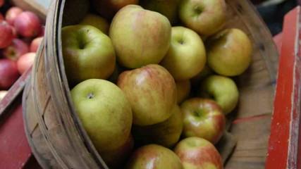 Heirloom Apples Festivals
