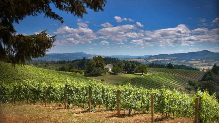 David Hill Vineyards & Winery in Forest Grove, Oregon