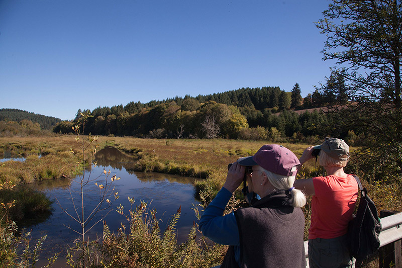Bird Watching at Killin Wetlands in Banks in Oregon's Tualatin Valley