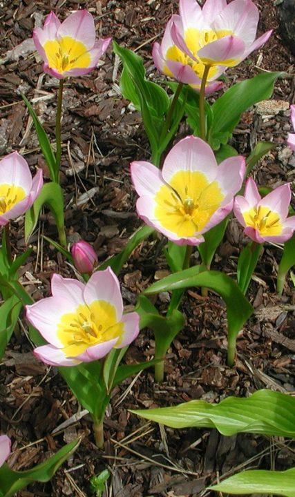 0703_Flowers