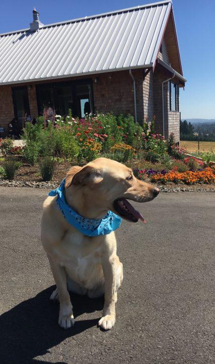 Dog-friendly fun in Oregon's Tualatin Valley