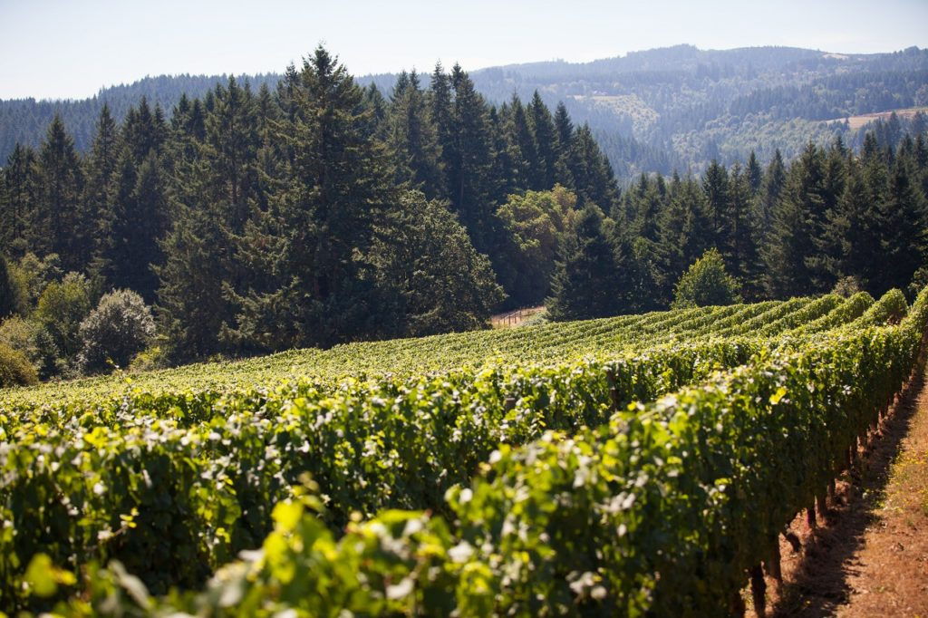 Ruby Vineyards in the Tualatin Valley