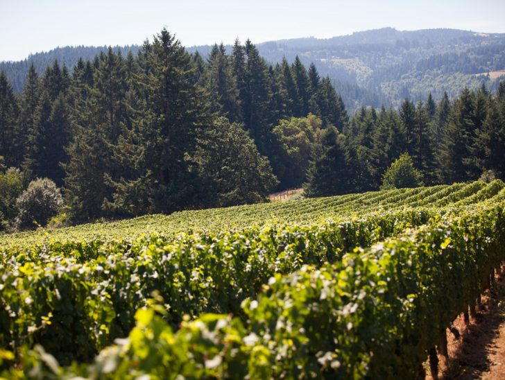 Ruby Vineyards in Hillsboro, Oregon