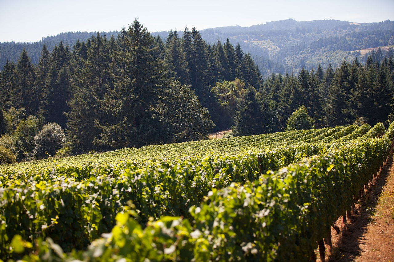 Ruby Vineyard & Winery in Oregon's Tualatin Valley