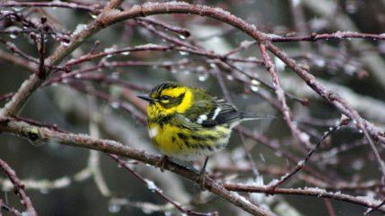 Tualatin River Photo Contest 2012: Winter Birding Season in Oregon's Tualatin Valley