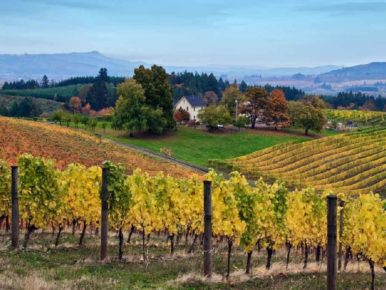 Where to See the Colors of Fall in Tualatin Valley