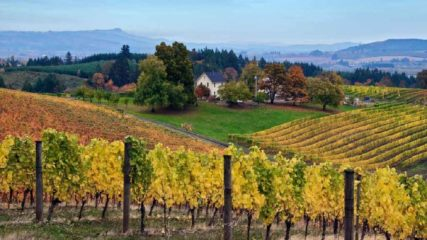David Hill Vineyards in the Fall