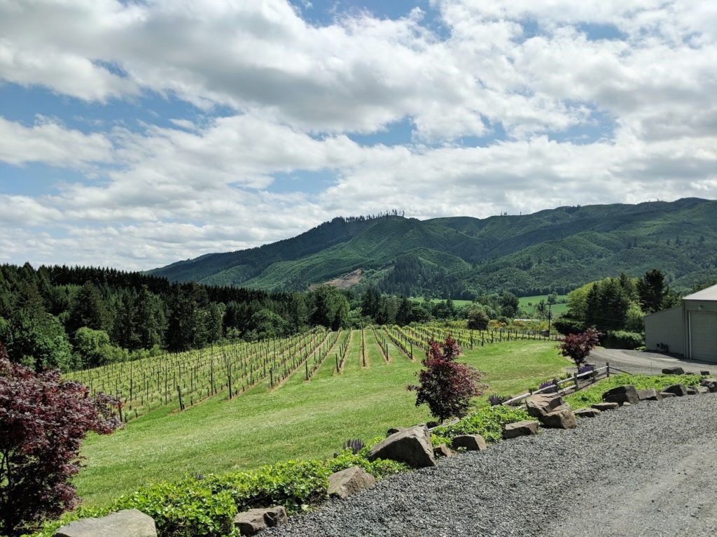 Willamette Valley old vines