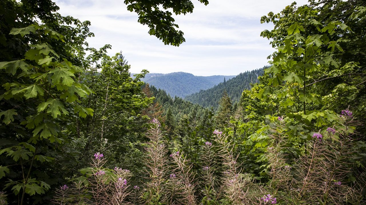 Tillamook State Forest in Oregon's Tualatin Valley