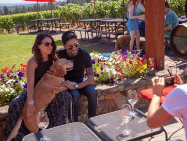 Canines Uncorked, a dog-friendly event in Oregon